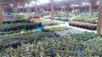 large selection of plants