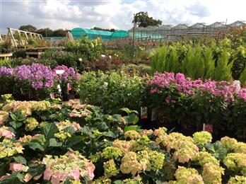 norfolk plant centre