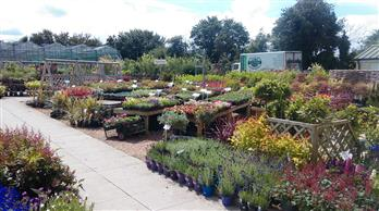 sunny day at our plant centre