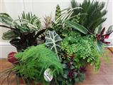 Houseplants Norfolk